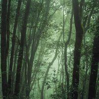 Sonidos Relajantes   Sonidos Para Aliviar El Estrés