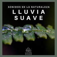 Sonidos de la Naturaleza: Lluvia Suave