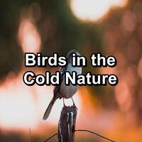 Birds in the Cold Nature