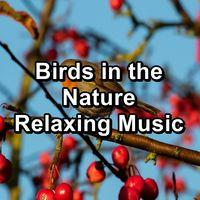 Birds in the Nature Relaxing Music
