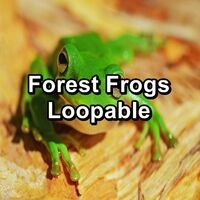 Forest Frogs Loopable