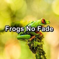 Frogs No Fade