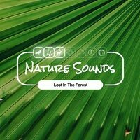 Nature Sounds Lost In The Forest
