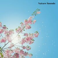 Nature Sounds Sleep Music, Session 6