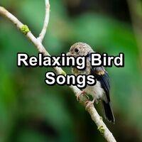 Relaxing Bird Songs