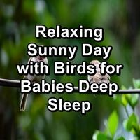Relaxing Sunny Day with Birds for Babies Deep Sleep