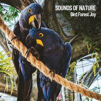 Sounds of Nature: Bird Forest Joy