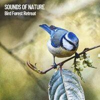 Sounds of Nature: Bird Forest Retreat