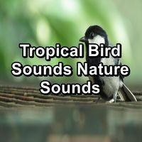 Tropical Bird Sounds Nature Sounds