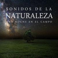 Sonidos de la Naturaleza: una Noche en el Campo