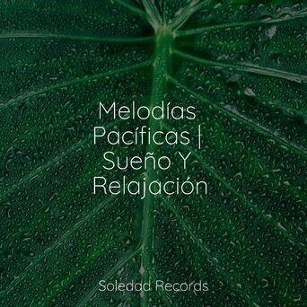 Melodías Pacíficas   Sueño Y Relajación